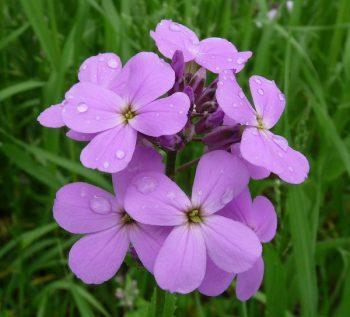 Attract Hummingbirds, Hummingbird Plants, Hummingbird Plants for Shade, Garden, Garden Ideas, Gardening, Gardening Ideas, Garden Tricks, Gardening Tips