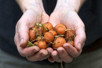 Growing Carrots, Vegetable Gardening, Vegetable Gardening for Beginners, Gardening Ideas, Garden Ideas, Gardening for Beginners