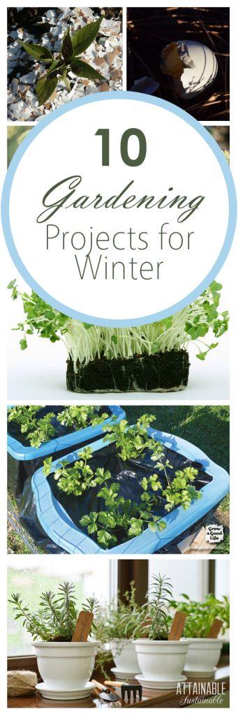 DIY Gardening Projects, Gardening Projects, Gardening Ideas, Garden Ideas, DIY Garden Ideas, Gardening Projects for beginners, Gardening for Beginners