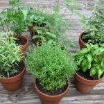 Spring Gardening, Spring Garden, Gardening Ideas, Garden Ideas, Gardening Tips, Gardening for Beginners