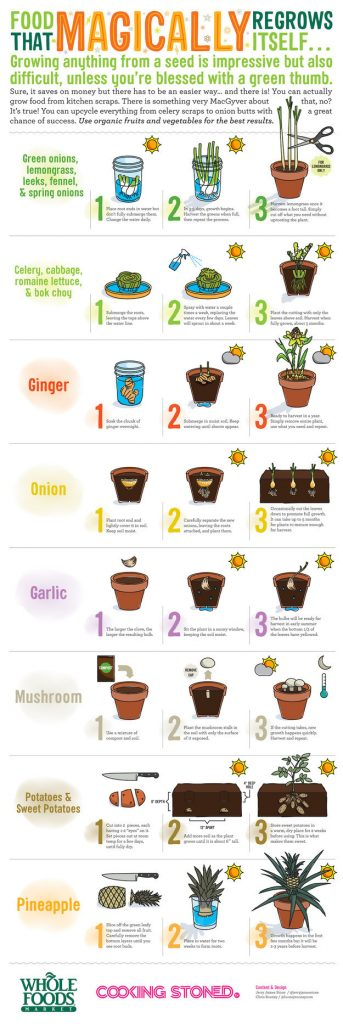 Gardening Projects, Winter Gardening Projects, Gardening, Gardening Ideas, Garden Ideas, DIY Gardening Projects