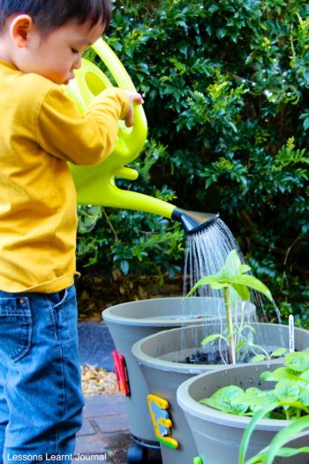 13 kid gardening projects bees and roses for Gardening tips for kids