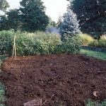 Garden Soil, How to Improve Soil Quality, Easy Ways to Improve Soil Quality, How to Improve Soil, Improving Garden Soil, Garden Soil, How to Improve Garden Soil, Gardening, Gardening 101, Vegetable Garden.