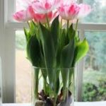 Container Gardening Tulips, Growing Tulips In Pots, Growing Tulips Indoors, Gardening, Gardening Tips, Gardening Tips and Tricks, Garden Ideas