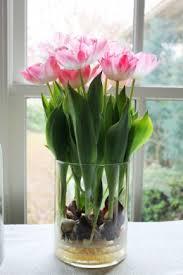 Container Gardening Tulips, Growing Tulips In Pots, Growing Tulips Indoors, Gardening, Gardening Tips, Gardening Tips and Tricks, Garden Ideas