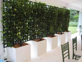 Outdoor Privacy, Plants for Outdoor Privacy, Outdoor Privacy Plants, Garden Ideas, Gardening Ideas, Outdoor DIY