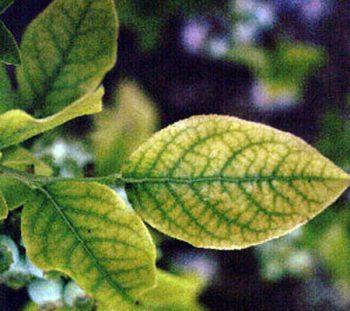 Yellowing Plants, Plants Yellowing, Plants Yellowing Leaves, Plant Care, Plant Care Tips, Houseplant Care, Indoor Garden, Indoor Gardening