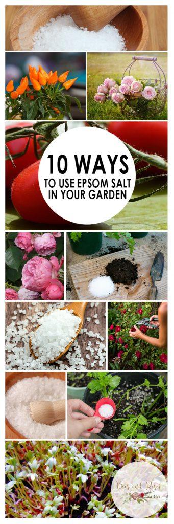 Gardening, Gardening Tips and Tricks, Gardening With Epsom Salt, Natural Pest Removers, Epsom Salt, Uses for Epsom Salt, Natural Gardening, Natural Gardening Hacks, Popular Pin