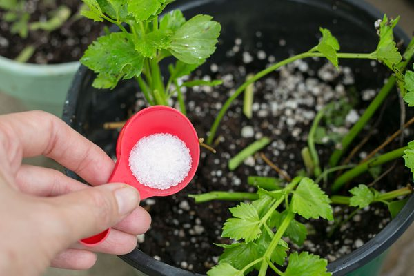10 Ways to Use Epsom Salt In Your Garden