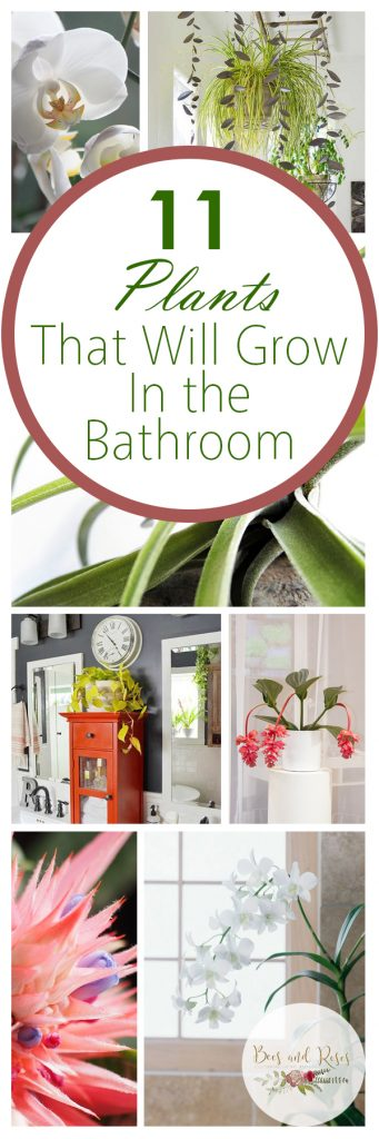Bathroom Plants, Indoor Gardening, Indoor Garden, Gardening, Garden Ideas, Gardening Tips, Gardening Tricks