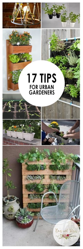Urban Gardening, Gardening 101, Gardening Tips and Tricks, Indoor Gardening, Urban Gardening, Gardening TIps and Tricks, Urban Gardening Hacks