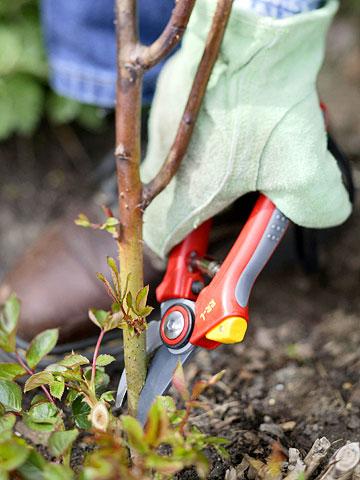 Gardening Tips, Spring Gardening, Gardening Tricks, Gardening Hacks, Gardening Ideas, Spring Garden Ideas