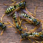 How to Get Rid of Wasps, How to Naturally Get Rid of Hornets, Pest Control, Natural Pest Control, Gardening, Gardening Tips and Tricks, Organic Gardening, Gardening Tips and Tricks, Easy Pest Control Hacks, How to Control Wasps and Hornets, Popular Pin