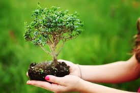 How to Grow a Bonsai Tree2