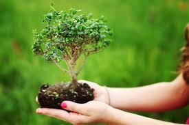 Bonsai Trees, Bonsai Tree, Bonsai Tree Care, Bonsai Tree Indoors, Bonsai Tree for Beginners, Garden, Indoor Garden, Indoor Gardening, Gardening, Gardening TIps