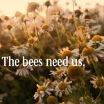 6 Things You Can Do To Help Save The Bees. Save The Bees, Bee Friendly Flowers, How to Have a Bee Friendly Garden, Bee Friendly Gardening Tips, Gardening, Eco Friendly Gardening, Organic Gardening, Popular Gardening Pins