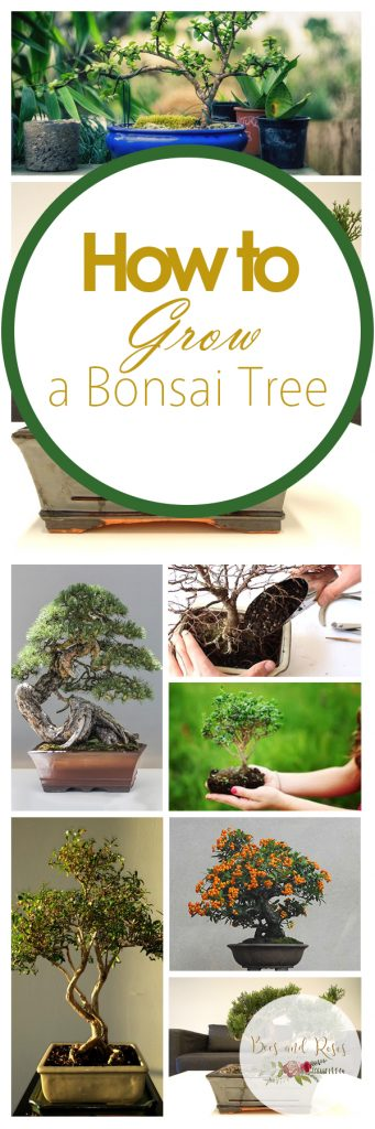 Bonsai Trees, Bonsai Tree, Bonsai Tree Care, Bonsai Tree Indoors, Bonsai Tree for Beginners, Garden, Indoor Garden, Indoor Gardening, Gardening, Gardening TIps
