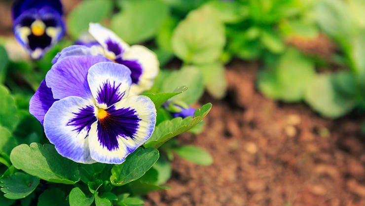 growing_peera_stockfoto_102522