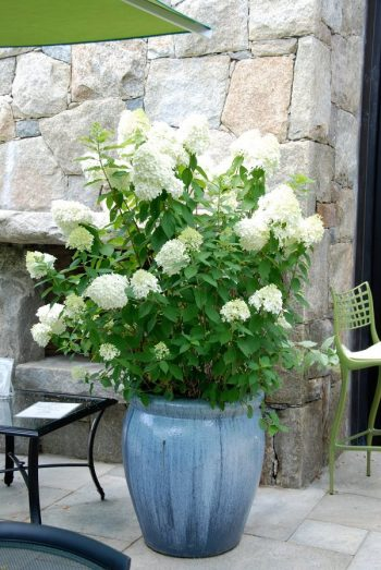 Garden Shrubs, Container Gardening, Shrubs for Container Gardening, Plants to Grow in Containers, Shrubs for Pots, Shrubs to Grow in Pots, How to Grow Shrubs, Gardening Tips and Tricks, Container Gardening Hacks, How to Container Garden, Popular Gardening Pin