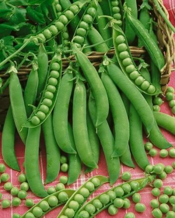 Easy Peasy: 6 Easy to Grow Peas- Growing Peas, Peas, Gardening, Gardening Tips and Tricks, Vegetable Gardening, Vegetable Gardening Hacks, How to Grow Peas, Pea Grow Guide, Growing Organic Peas, Garden, gardening 101, garden ideas