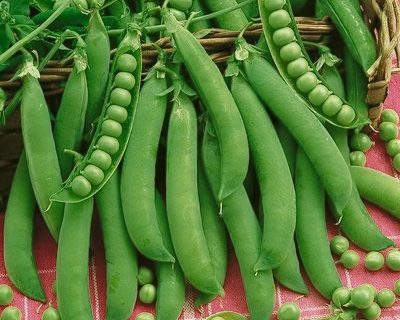 Easy Peasy: 6 Easy to Grow Peas-Gardening, Gardening Tips and Tricks, Vegetable Gardening, Vegetable Gardening Hacks, How to Grow Peas, Pea Grow Guide, Growing Organic Peas, Garden, gardening 101