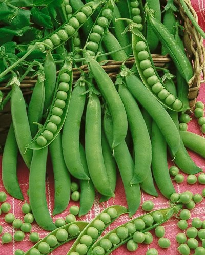Easy Peasy: 6 Easy to Grow Peas- Growing Peas, Peas, Gardening, Gardening Tips and Tricks, Vegetable Gardening, Vegetable Gardening Hacks, How to Grow Peas, Pea Grow Guide, Growing Organic Peas, Garden, gardening 101, garden ideas