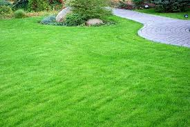 8 Tips for The Greenest Lawn in The Neighborhood
