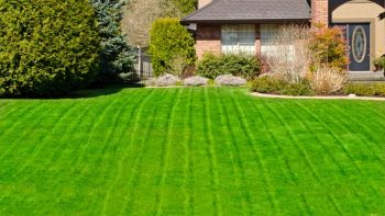 8 Tips for The Greenest Lawn in The Neighborhood2