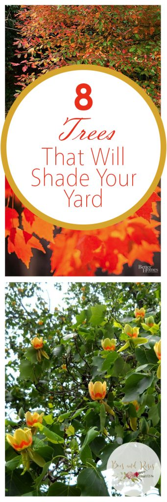 8 Trees That Will Shade Your Yard| Shade Trees, Trees, How to Grow Shade Trees, Shade Trees for Your Yard, Tree Care, Landscaping with Trees, Landscape Design, Outdoor Living, Popular Pin