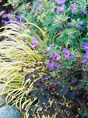 Easy Tips for A Great Garden Design2 - Copy - Copy