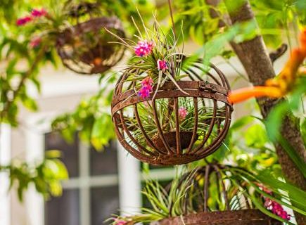Hang Tight {10 Hanging Gardens} Hanging Gardens, Container Gardening, Hanging Garden Ideas, How to Grow A Hanging Harden, Container Gardening Tips and Tricks, Shrubs Perfect for Container Gardening, Gardening, Gardening Hacks, Gardening Tips and Tricks, Landscaping, Landscaping Tips and Tricks
