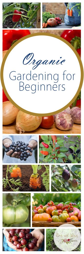 Organic Gardening For Beginners Bees And Roses