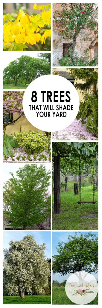 8 Trees That Will Shade Your Yard  Shade Trees, Trees to Grow, How to Grow Shade Trees, Shade Trees for Your Yard, Tree Care, Landscaping with Trees, Landscape Design, Outdoor Living, Popular Pin