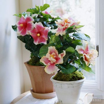 12 Houseplants That Bloom (And Smell Incredible!)   Houseplants That Bloom, Low Maintenance House Plants, Easy to Grow Houseplants, Pretty Houseplants, Indoor Gardening, Indoor Gardening Tips, Indoor Gardening Hacks
