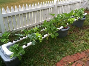 How to Start Hydroponic Gardening As A Beginner ~ Bees and ...