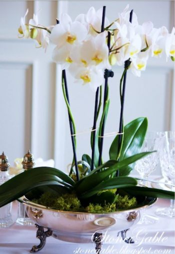 How to Care for Orchids (For the Prettiest of Blooms!) | How to Care for Orchids, Caring for Orchids, Orchid Care Tips, How to Care for Orchid Flowers, Indoor Gardening, Indoor Gardening Tips and Tricks, Caring for Orchid Flowers, Popular Pin