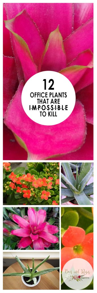 12 Office Plants that are IMPOSSIBLE to Kill| Office Plants, Office Plants Desk, House Plants Indoor, Indoor Gardening, Indoor Gardening Ideas