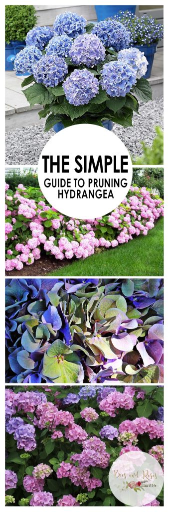 The Simple Guide to Pruning Hydrangea  Gardening, Gardening Hacks, How to Prune Hydrangea, Pruning Hydrangea, Gardening Tips and Tricks, Pruning Hydrangea, Growing Hydrangea, How to Grow Hydrangea