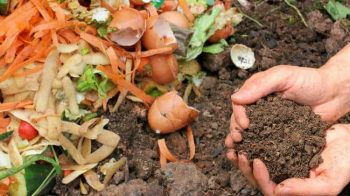 How to Start Composting For Beginners| Composting, How to Start Composting, Easily Start Composting, Easy Compost Hacks, Gardening Tips and Tricks, Composting Tips for The Garden, Composting Tips for Beginners