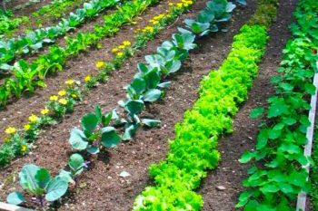 Vegetable Garden, Vegetable Garden Layout, Vegetable Gardening, Vegetable Gardening for Beginners, Vegetable Garden Ideas, Vegetable Garden Beginner