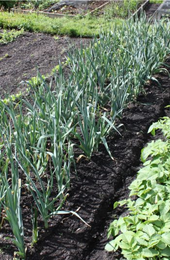 Check out these vegetable garden layout tips and tricks. Changing the design of your vegetable garden layout can do wonders in terms of vegetable garden health.