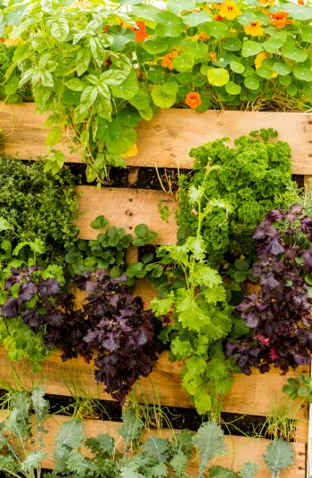 Check out these vegetable garden layout tips and tricks. Changing the design of your vegetable garden layout can do wonders in terms of vegetable garden health. You will love these ideas!