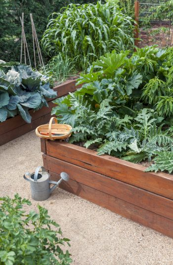 Check out these vegetable garden layout tips and tricks. Changing the design of your vegetable garden layout can do wonders in terms of vegetable garden health. Raised garden beds are always popular.