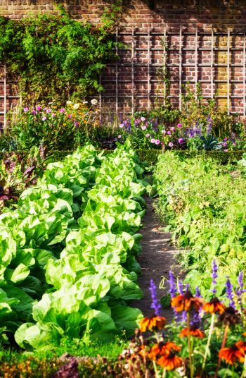 Check out these vegetable garden layout tips and tricks. Changing the design of your vegetable garden layout can do wonders in terms of vegetable garden health. Take a look!