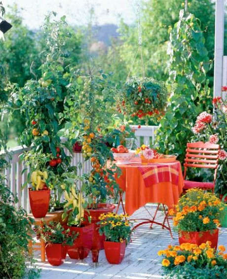 10 Things to Know Before You Plant Tomatoes| Plant Tomatoes, Planting Tomatoes, Growing Tomatoes, Vegetable Garden, Vegetable Gardening, Vegetable Gardening Ideas, Vegetable Gardening Tips and Tricks, Gardening, Garden Ideas