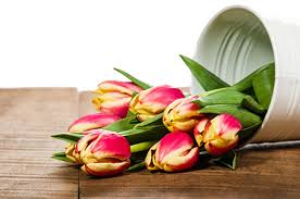 Caring for Fresh Cut Tulips  How to Care for Cut Tulips, Caring for Cut Flowers, How to Care for Cut Flowers, Gardening, Gardening Tips and Tricks, How to Care for Flowers, Caring for Cut Flowers, Popular Pin