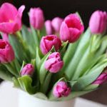 Caring for Fresh Cut Tulips| How to Care for Cut Tulips, Caring for Cut Flowers, How to Care for Cut Flowers, Gardening, Gardening Tips and Tricks, How to Care for Flowers, Caring for Cut Flowers, Popular Pin