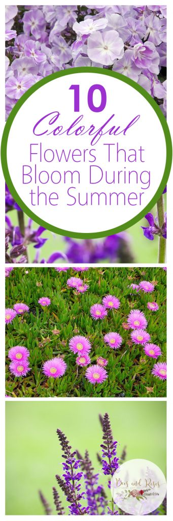 Hot Weather Plants, Hot Weather Plants Drought Tolerant, Hot Weather Plants Sun, Hot Weather Plants Garden, Gardening, Garden Ideas, Gardening Ideas, Garden
