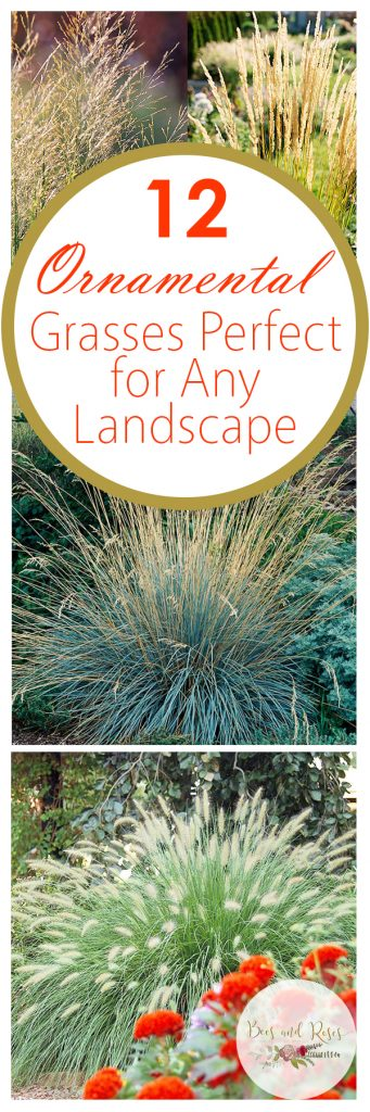12 Ornamental Grasses Perfect for Any Landscape| Ornamental Grasses, Easy to Grow Ornamental Grasses, Garden Design, Landscape Design, How to Landscape With Ornamental Grasses, Garden Design Tips and Tricks, Popular Pin