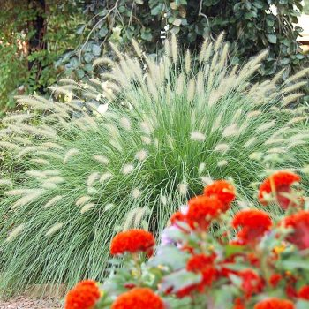 12 Ornamental Grasses Perfect for Any Landscape  Ornamental Grasses, Easy to Grow Ornamental Grasses, Garden Design, Landscape Design, How to Landscape With Ornamental Grasses, Garden Design Tips and Tricks, Popular Pin